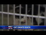Кот ожил спустя пять дней после своих похорон и вернулся домой Источник: http://nevsedoma.com.ua/index.php?newsid=222040