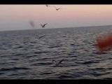 Чайки на Черном море в ялте