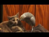 Папугай наезжает на кота