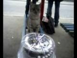 моё день рождения20лет,купила торт а кошка оценила:-)